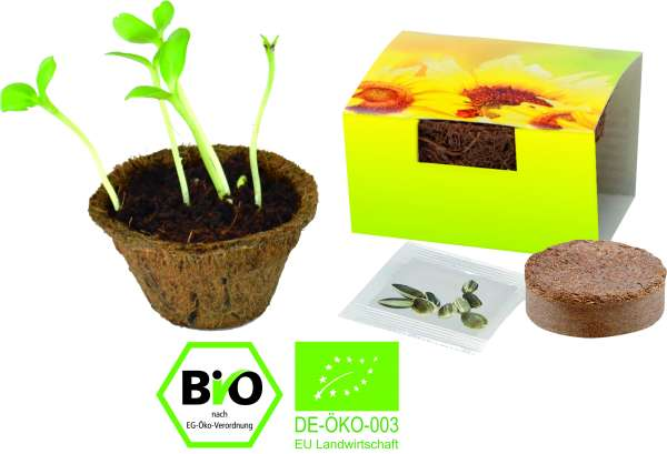 Kleiner Kokos-Topf Bio Sonne