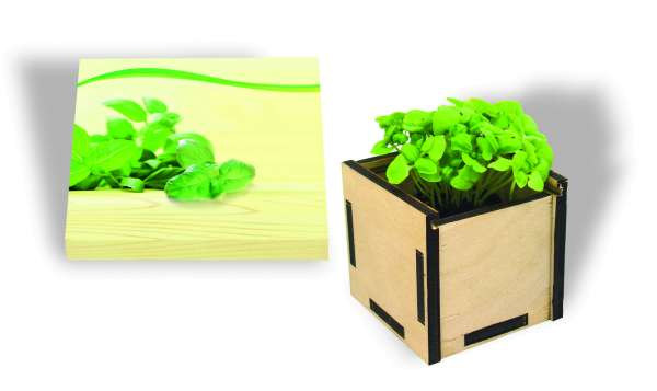 Pflanzsteckbox Green