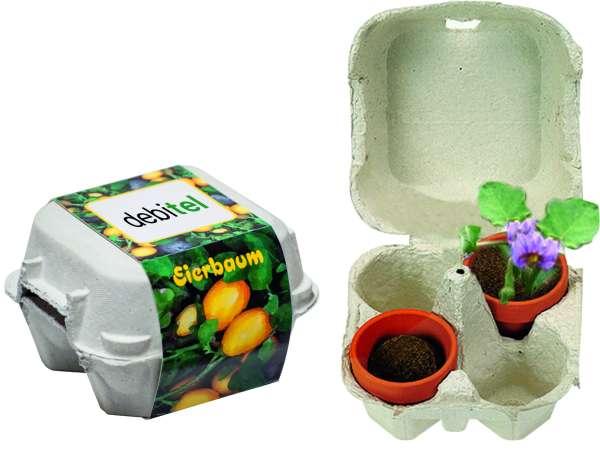 Eierbaum-Box
