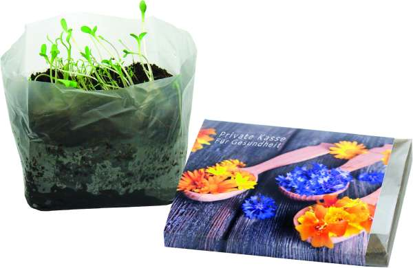 Wachstum im Quadrat Blütengenuss